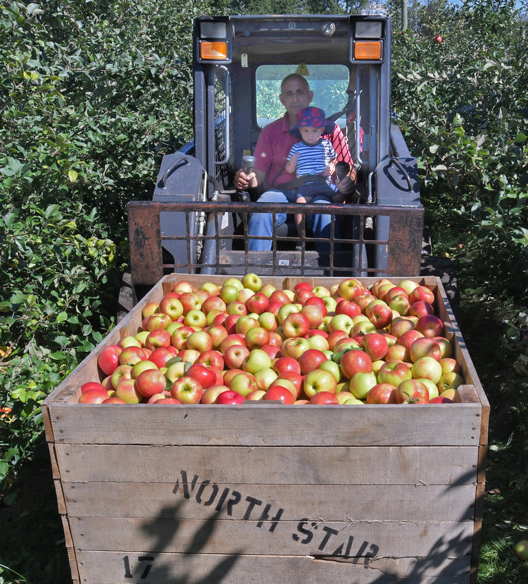 GENERATIONAL HAUL — George Joseph and his grandson, Graham, pick up a load of apples to be brought back to the Northstar Orchard store. The bustling business has come a long way since its beginnings as a roadside stand in 1986.