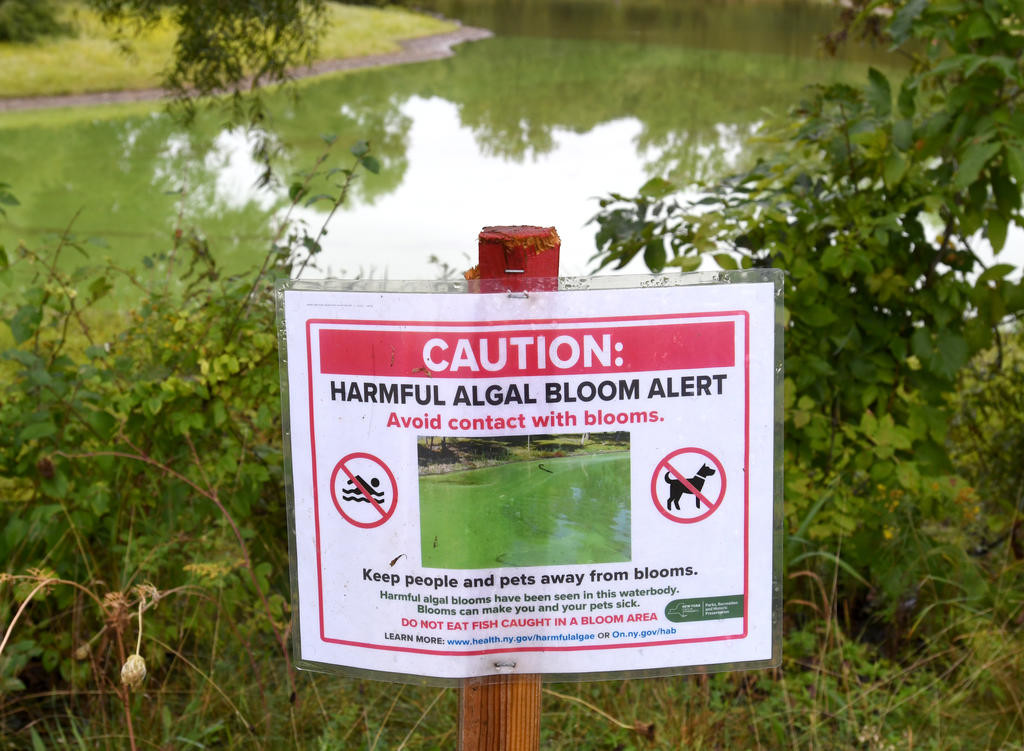 LOOK OUT FOR BLOOMS — A sign posted at Turtle Pond at Delta Lake State Park urges caution in conjunction with a report of likely harmful algae (or algal) blooms on the pond.  (Sentinel photo by John Clifford)