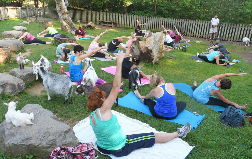 "CALMING PRESENCE — Including animals like goats in a yoga class can help students ""forget about the outside world"" according to instructor Bianca Johnson.  (Sentinel file photo by John Clifford)"
