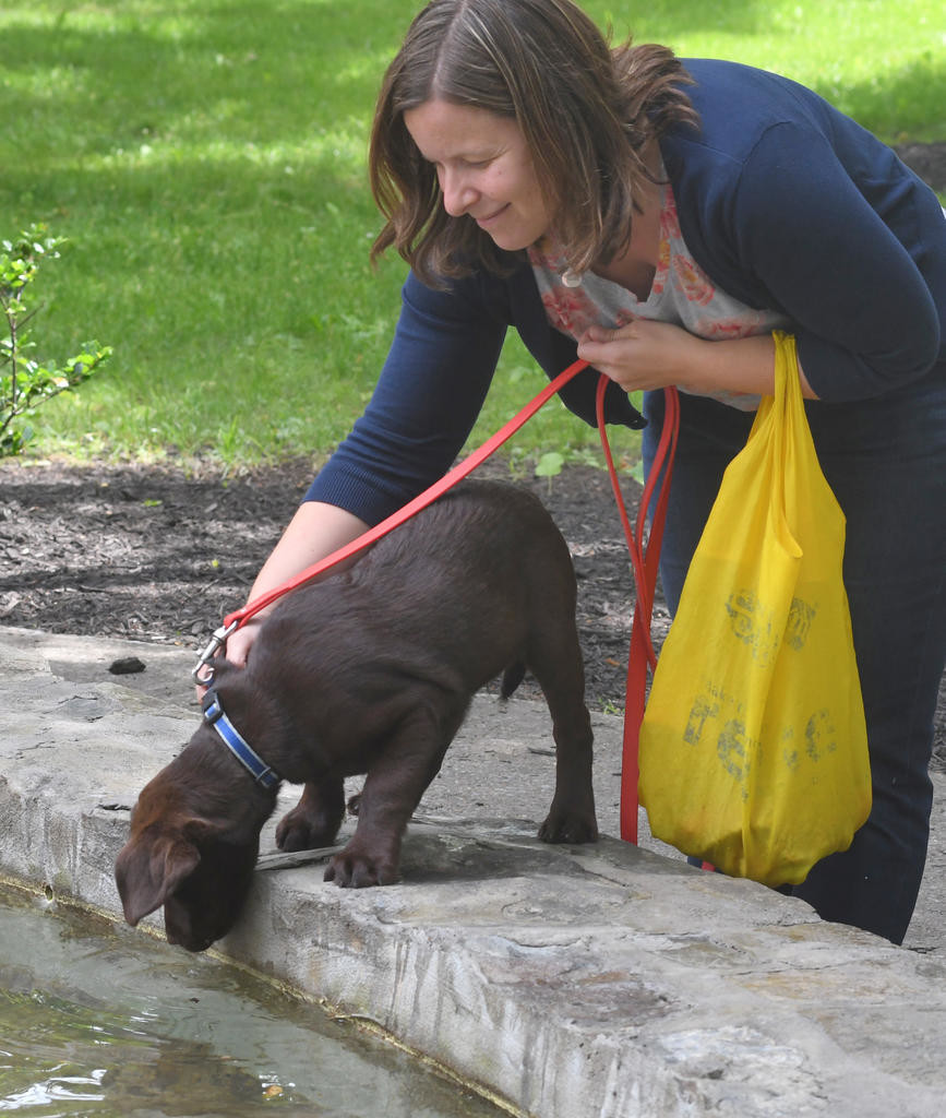 NOSE DIVE — Taryn Rio, of New Hartford, keeps her chocolate labrador, Rudy, from jumping in the fountain water on June 7 at the Clinton Farmers Market.  (Clinton Record photo by John Clifford)