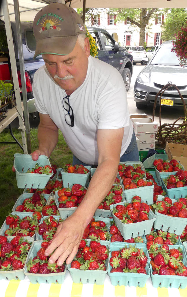 FRUITS OF THE HARVEST — Jim Matteson of Matteson's Market in White Lake, N.Y. stocks the strawberrys during the Clinton Farmers Market.  June is the month for strawberry picking and buying.  (Clinton Record photo by John Clifford)