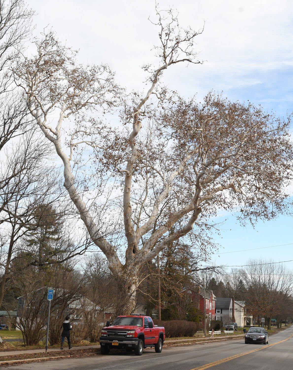The huge old Sycamore tree in Clinton on College Street just on the east side of the bridge.