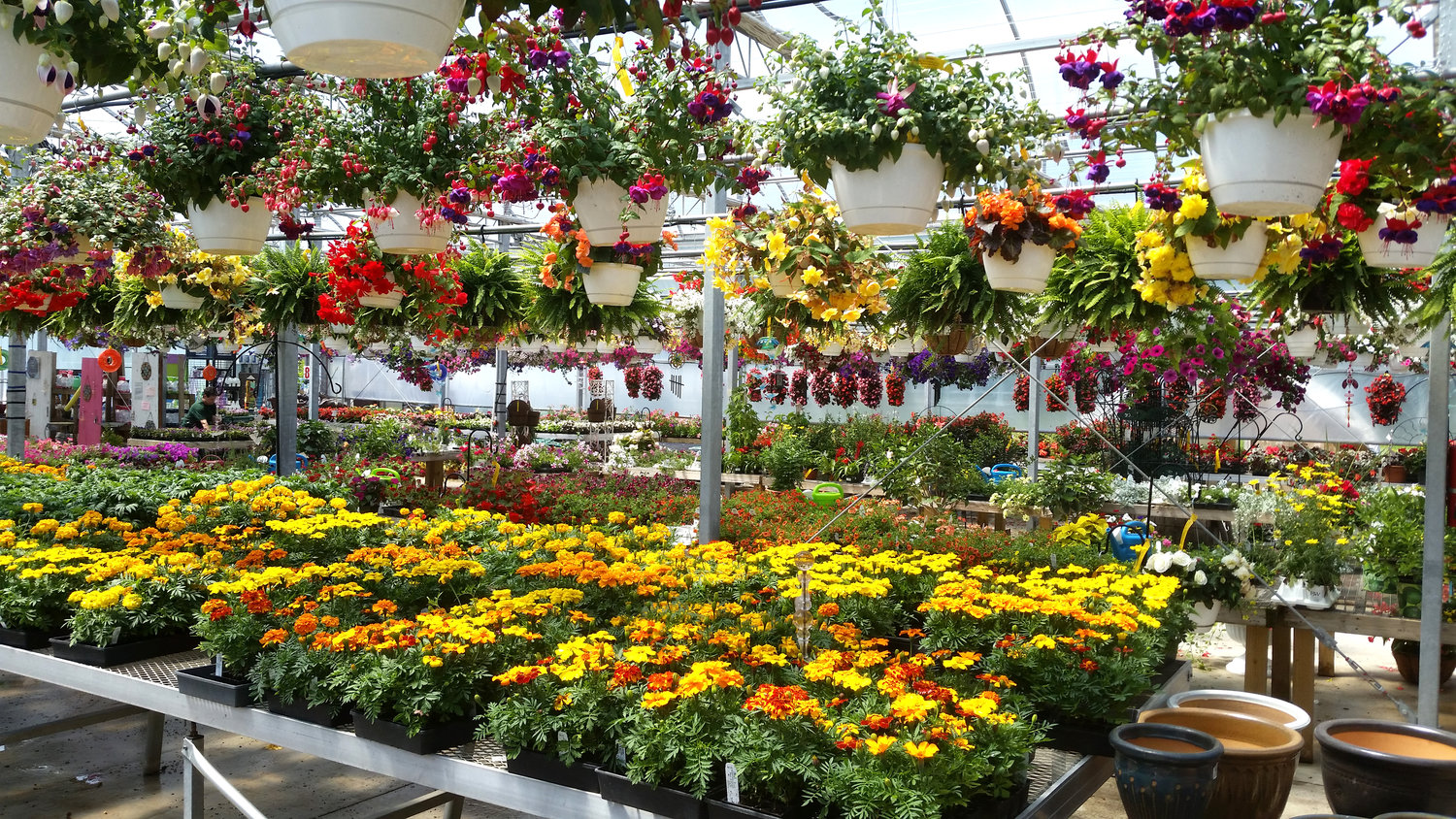 It S Green And Colorful All Year Round At Olney S Flowers Rome