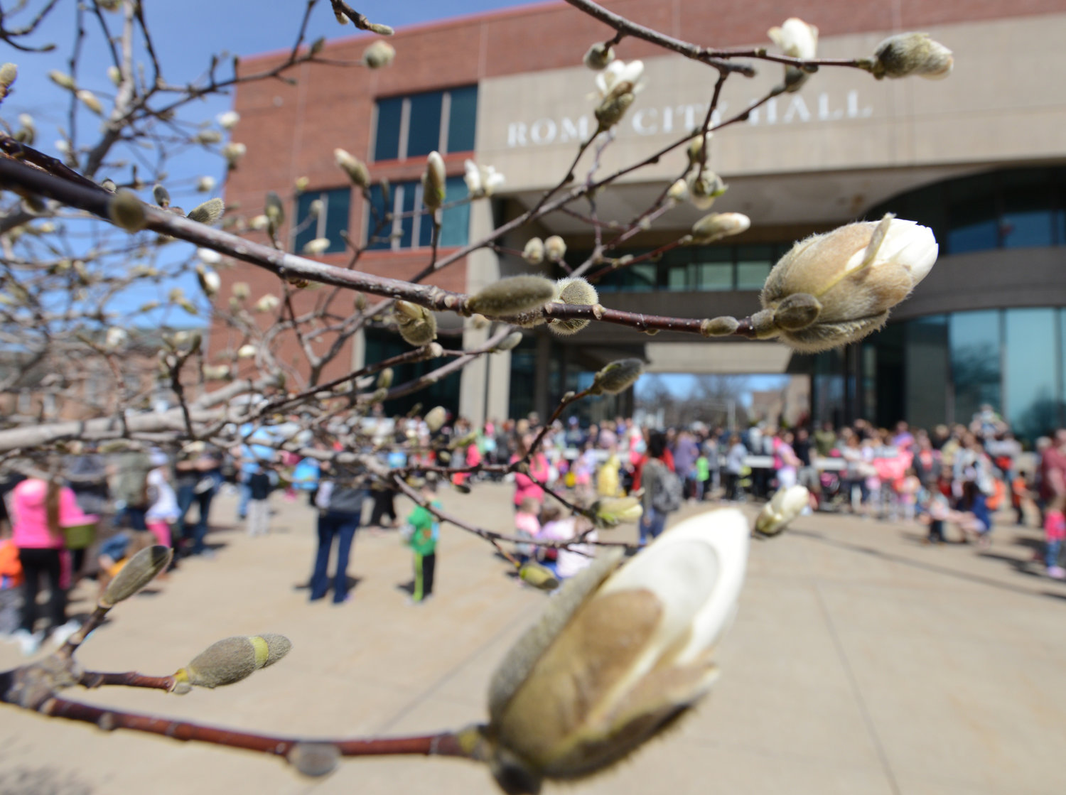 SPRINGTIME — Trees were beginning to bud on Griffo Green Wednesday. In the background, participants in the City Hall Easter Egg Hunt waited to begin searching for eggs.