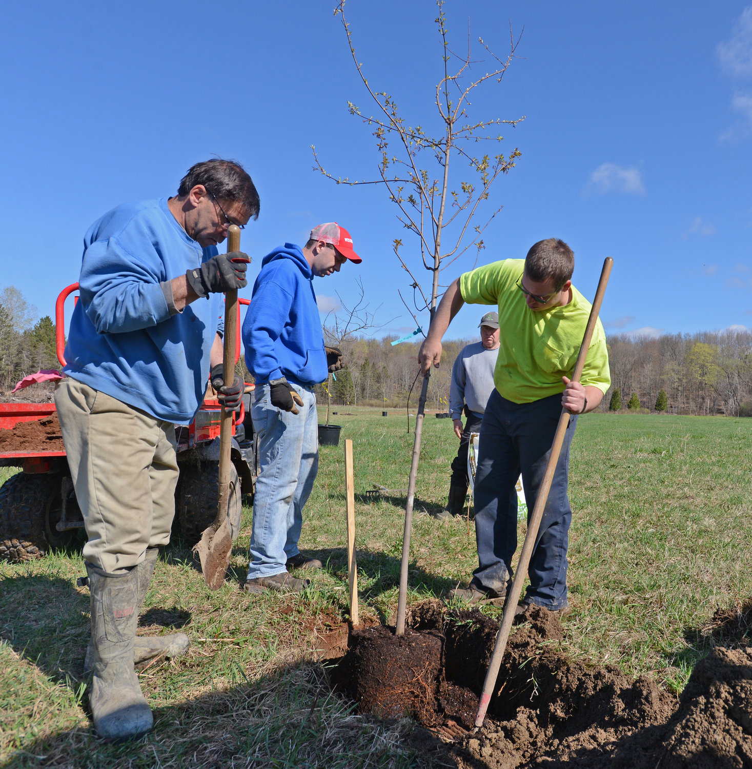 ONE DOWN, 117 TO GO — Town of Floyd employees Larry Gruby, Chris Taylor, Gabe Streiff and Jordan Dygert plant a red maple tree along a nature trail the town is constructing. The town is planting 118 trees to provide shade and beautification for the trail and town. More photos, www.romsentinel.com.