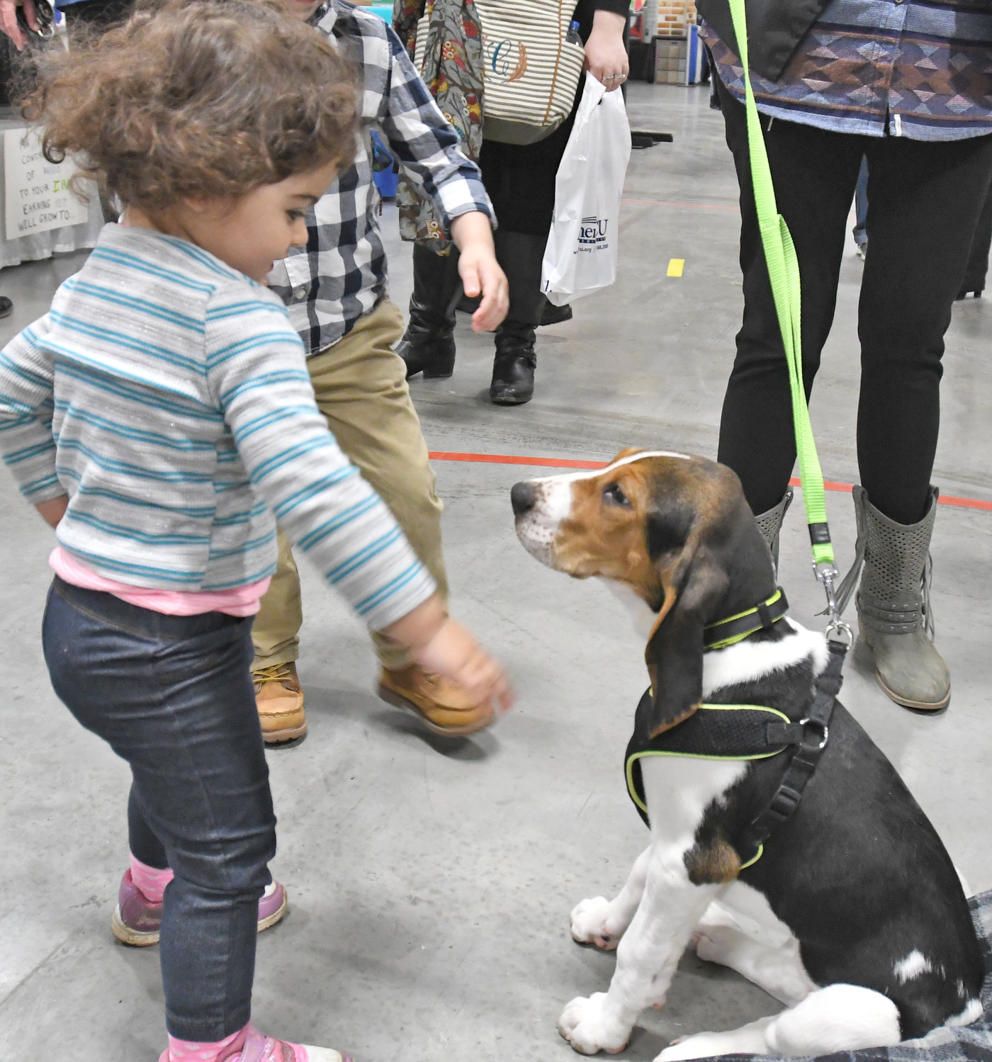 "HI THERE! — Yesmine Musallam, 2, daughter of Katlin White, pets a Rome Humane Society puppy ""Colt"" a purebred and AKC registered Tree Walker Coon Hound at the Rome Home EXPO on Saturday afternoon."
