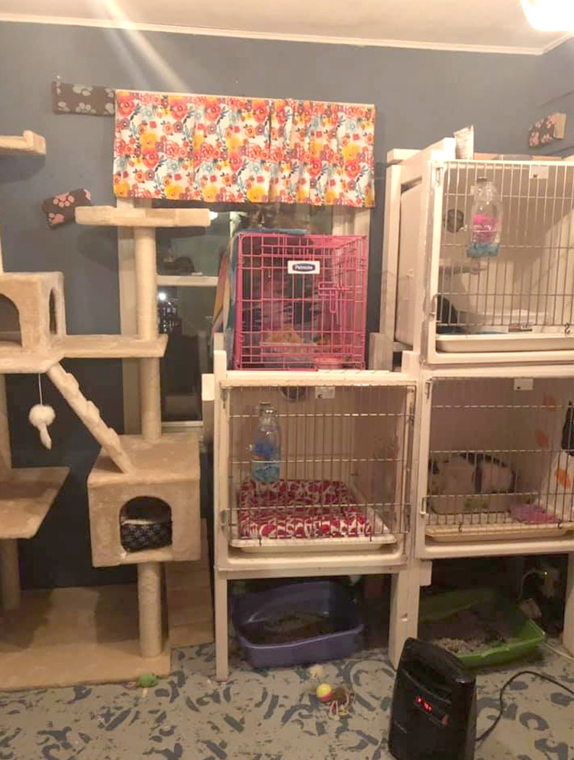 SMALL SHELTER — RTHRS Purrfect Paws Cat & Kitten Rescue, 3240 Oneida St., Chadwicks, takes in abused and neglected kittens and cats.