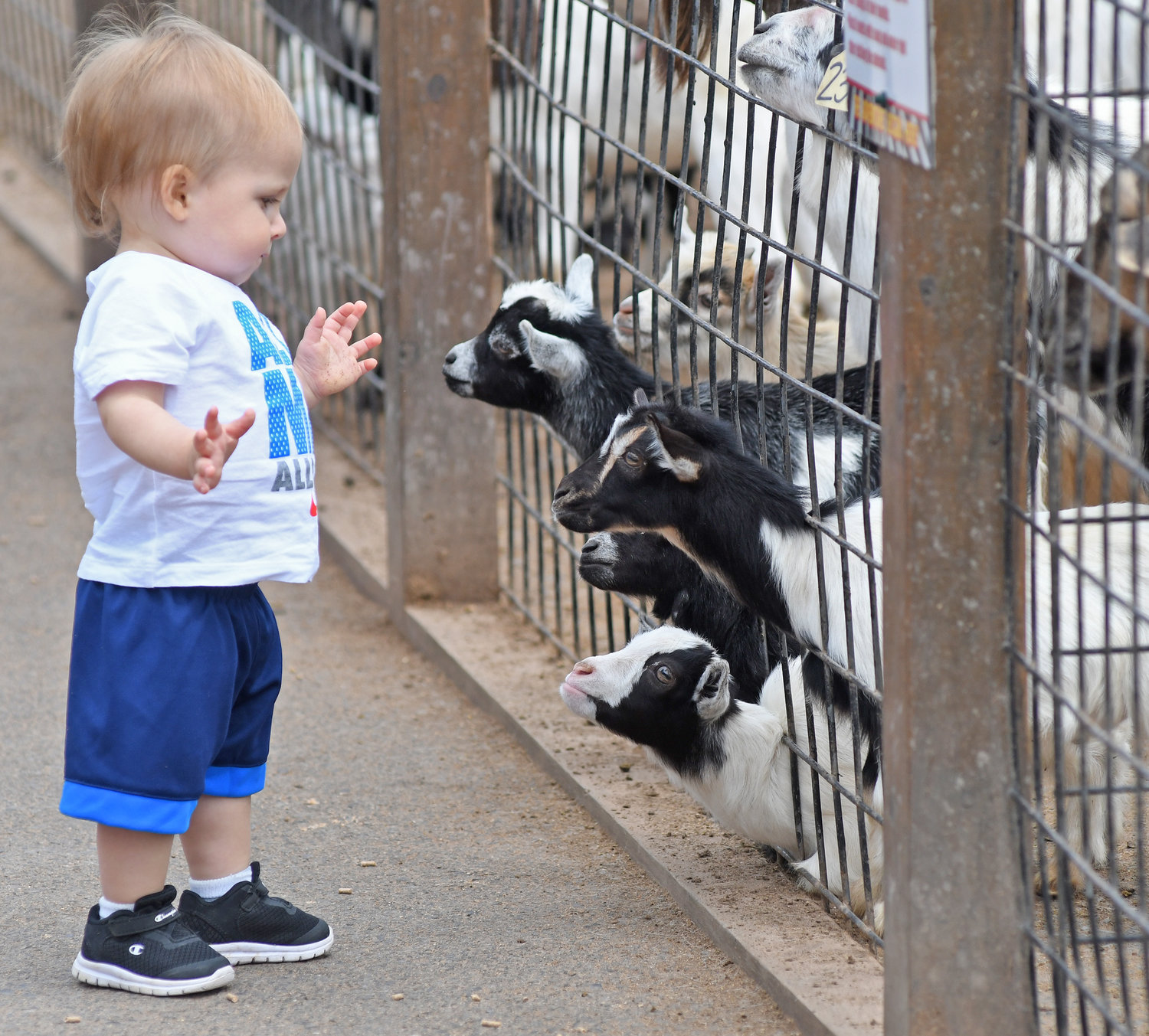 Children S Zoos Gear Up For Fun Learning Rome Daily Sentinel