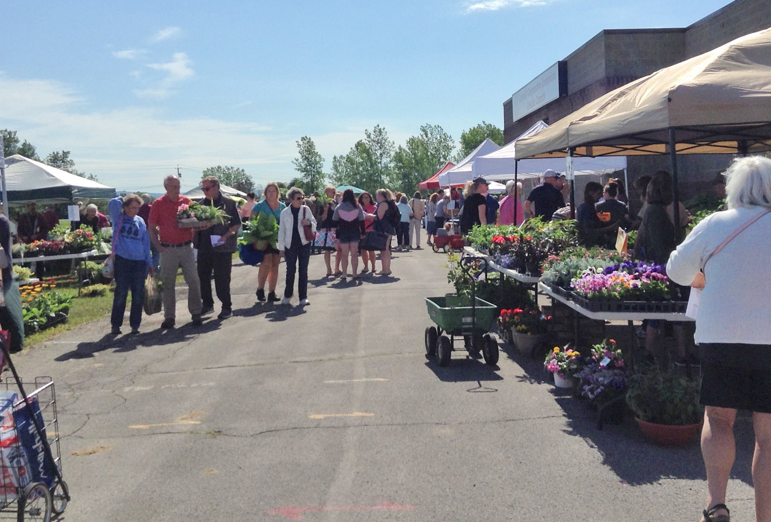 BEAUTIFUL DAY — Attendees enjoy the  23rd Herb & Flower Festival on Saturday, June 15.
