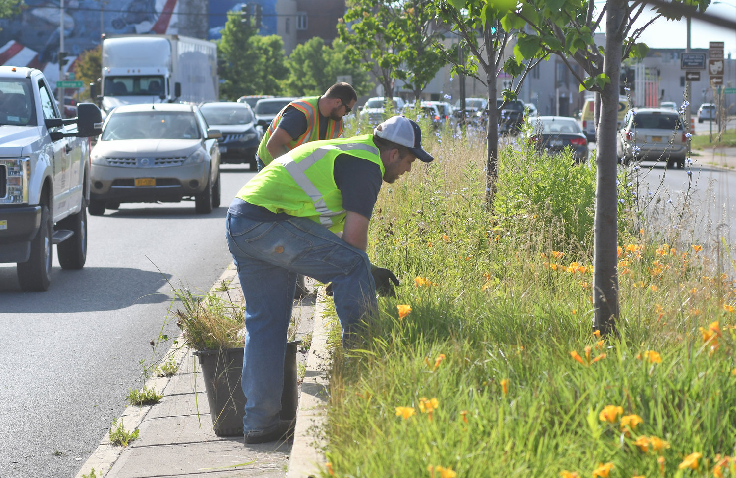 TIDYING UP — City employees Mike Barrett and Billy DiPaolo pull weeds from amidst the trees and flowers on a median on Erie Boulevard West today. The city maintains the medians as part of its ongoing beautification efforts across Rome.