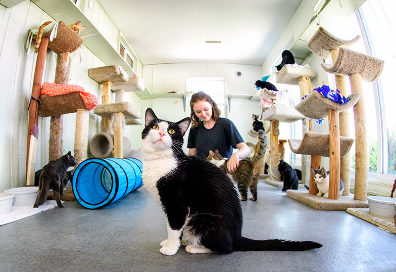 ROUND OF APPAWS? — Cats and kittens relax and play in the cat room at Herkimer County Humane Society. The society is one of dozens of agencies to receive funding from the Community Foundation of Oneida and  Herkimer Counties.