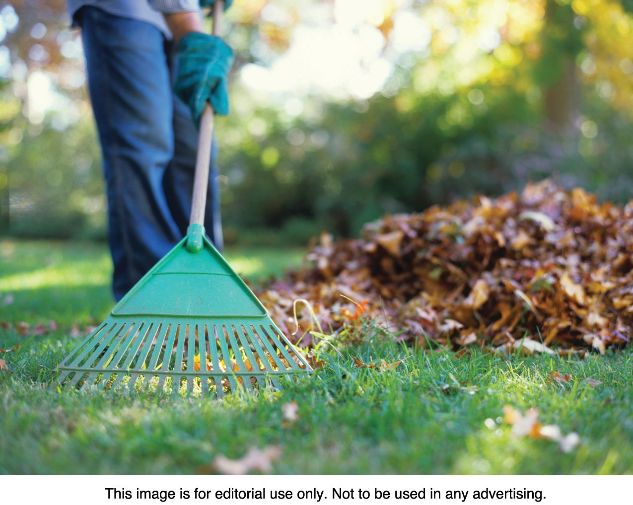 Waste agency offers guide to disposing of fall clean-up by