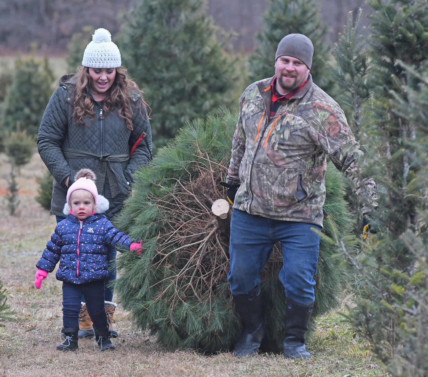 LITTLE HELPER — Two-year-old Madelynn Roth helps her father Kristopher and mother Kristine drag their Christmas tree on Friday at Moose Track Acres in Boonville. They selected an English species of white pine.