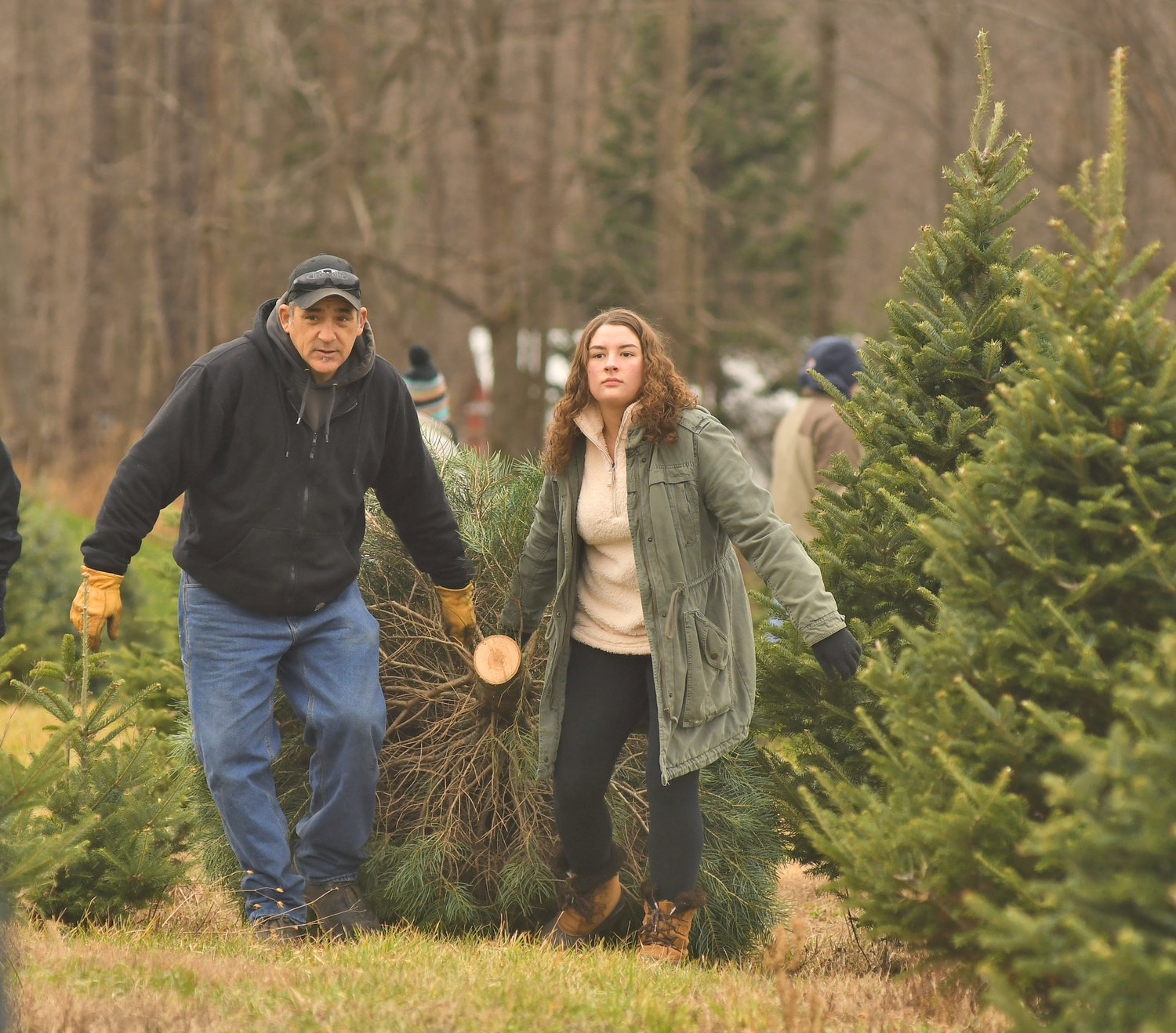 THEIR TREE — David and Jordanna Rubino of Westmoreland, drag out their family Christmas tree at Shuster Tree Farm in Verona Friday morning.