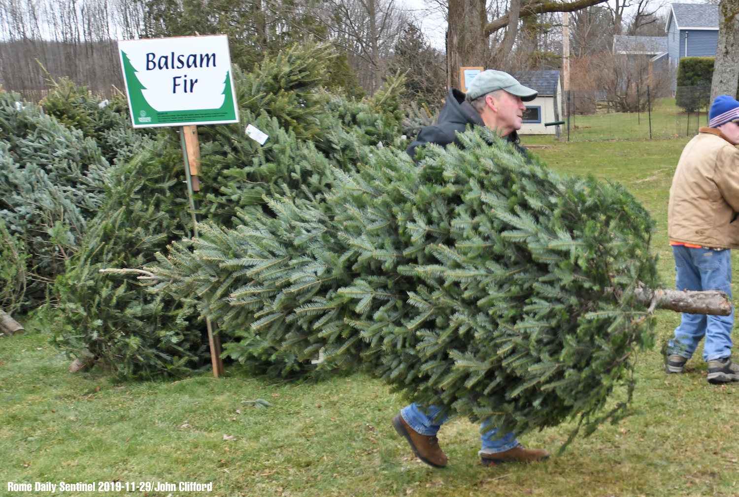 TREE CARRY — Verona's Shuster Tree Farm owner Dick Shuster carries out a tree for a customer Friday.