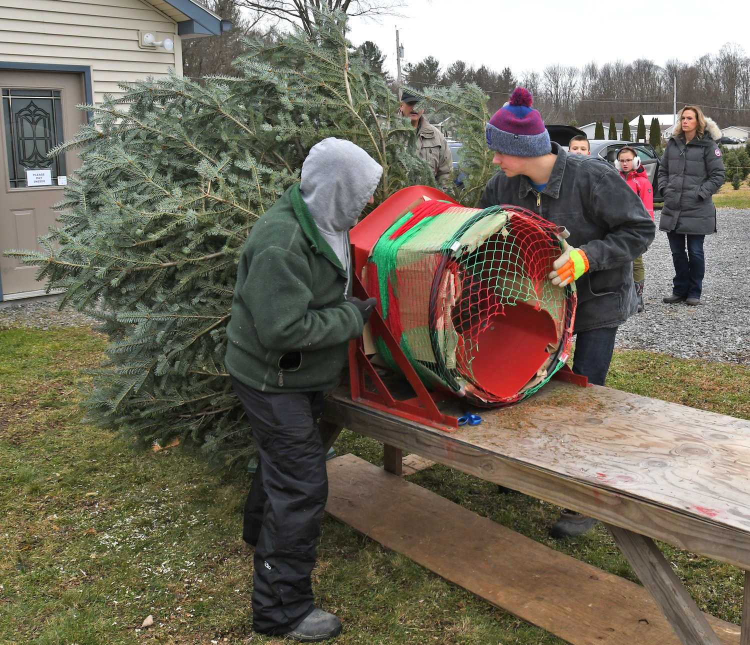 TREE WRAPPING — Aaron Abbe and Alex Freel workers at Shuster Tree Farm in Verona wrap up a tree at the Senn Road farm owned by Dick and Julie Shuster.
