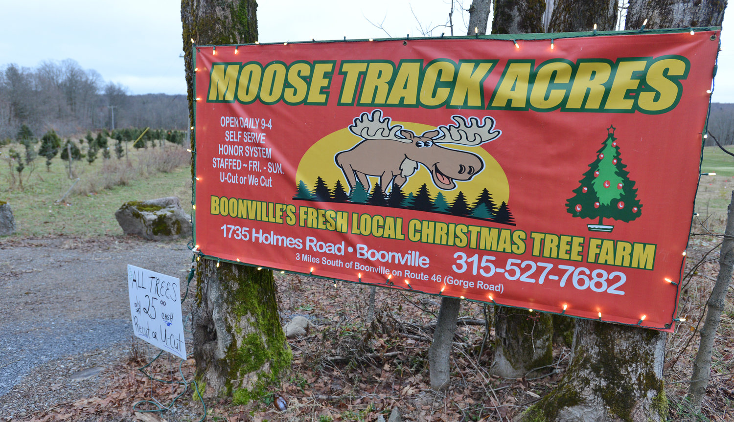 OPEN FOR FIVE YEARS — The sign at Moose Track Acres on Holmes Road in Boonville where Christmas trees have been sold for the past five years.