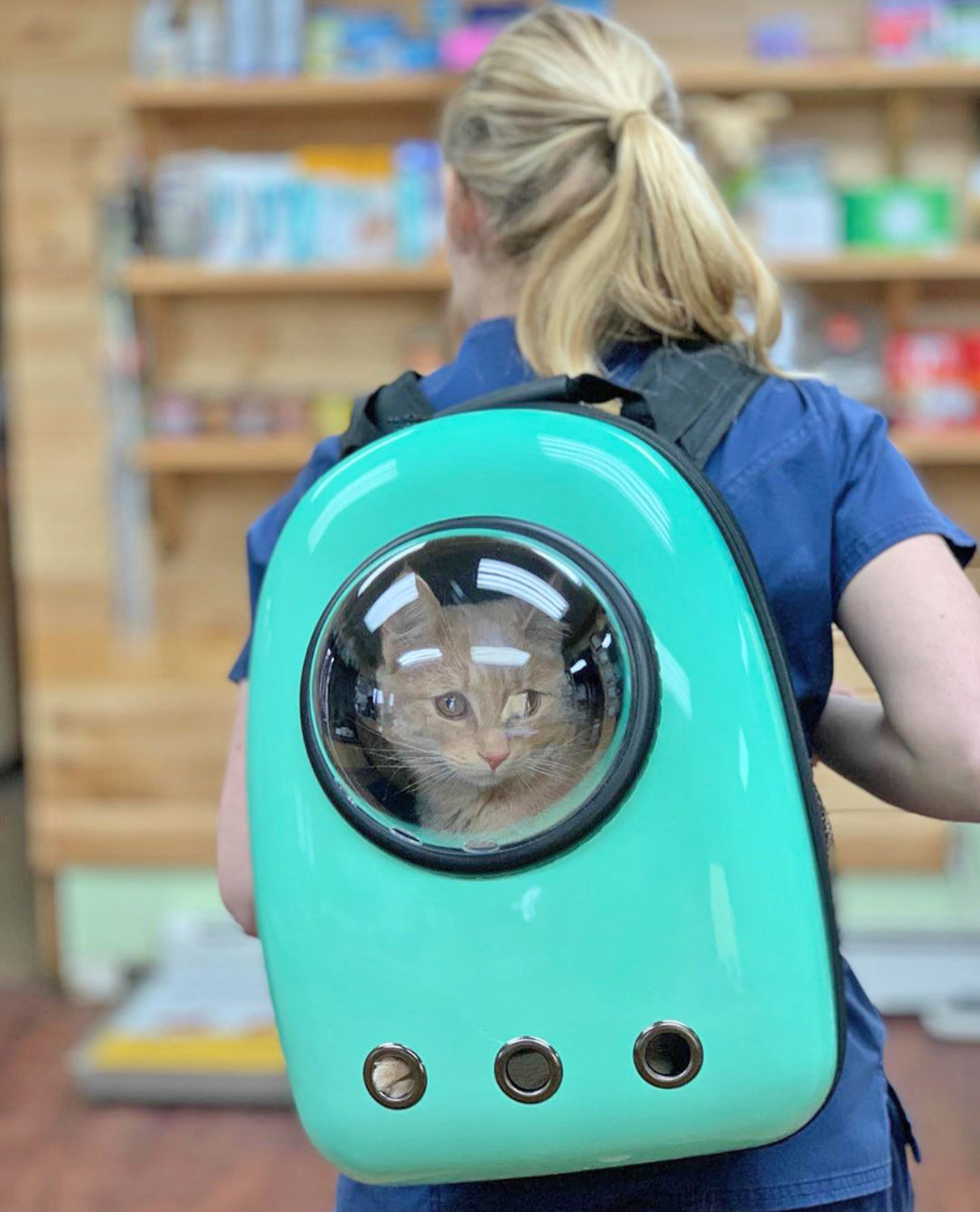 ON THE MOVE — Vet Assistant Taylor Calhoun, of Clinton Pet Vet on Dwight Avenue, carries Wheelie in a special backpack donated as a holiday gift from a local resident, to the rescue and sanctuary after receiving his bath and daily therapies.