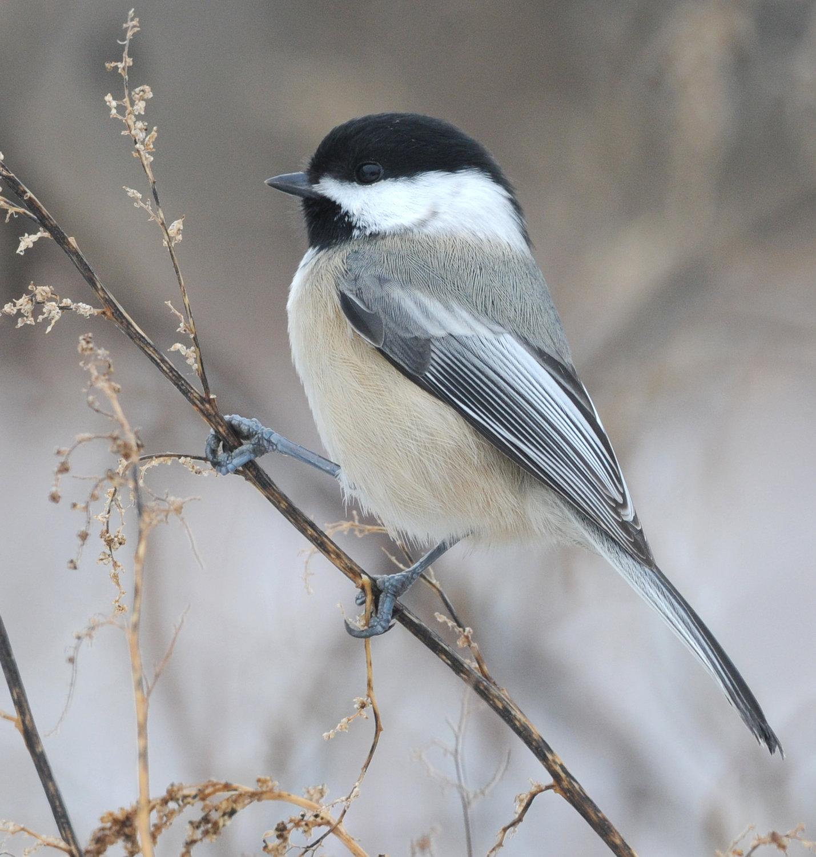 Backyard Birds Of New York State - House Backyards