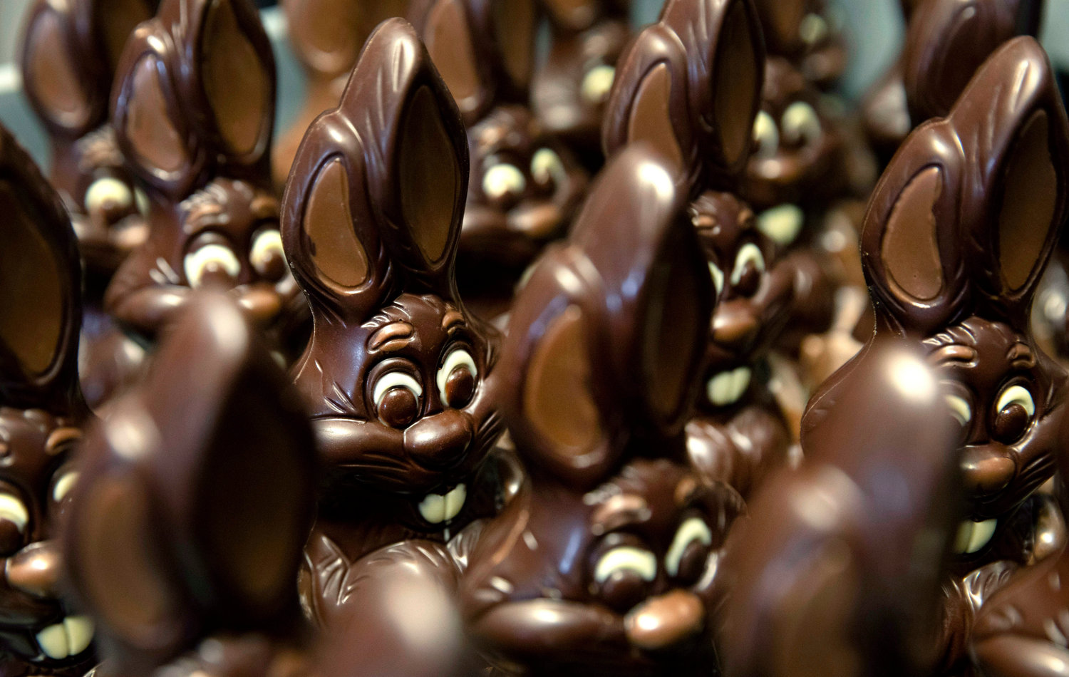 HOLIDAY TREAT —Chocolate rabbits wait to be decorated at the Cocoatree chocolate shop in Lonzee, Belgium. As all non-essential shops in Belgium have been closed due to the outbreak of COVID-19, many chocolatiers have had to resort to online sales, home delivery or pickup on site.
