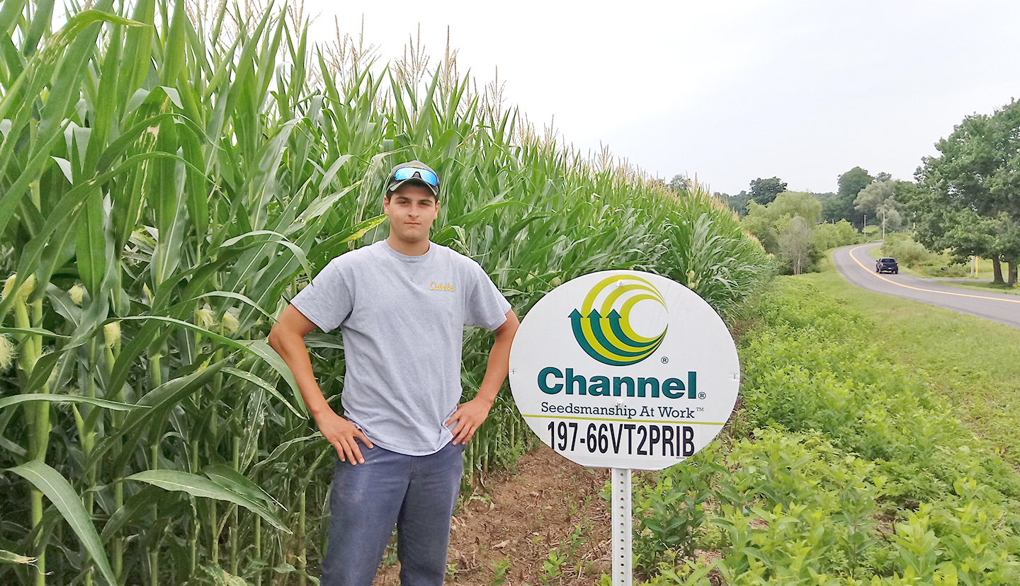 20-YEAR-OLD FARMER — Mike Vecchio by his cornfield on Eureka Road in Westmoreland.