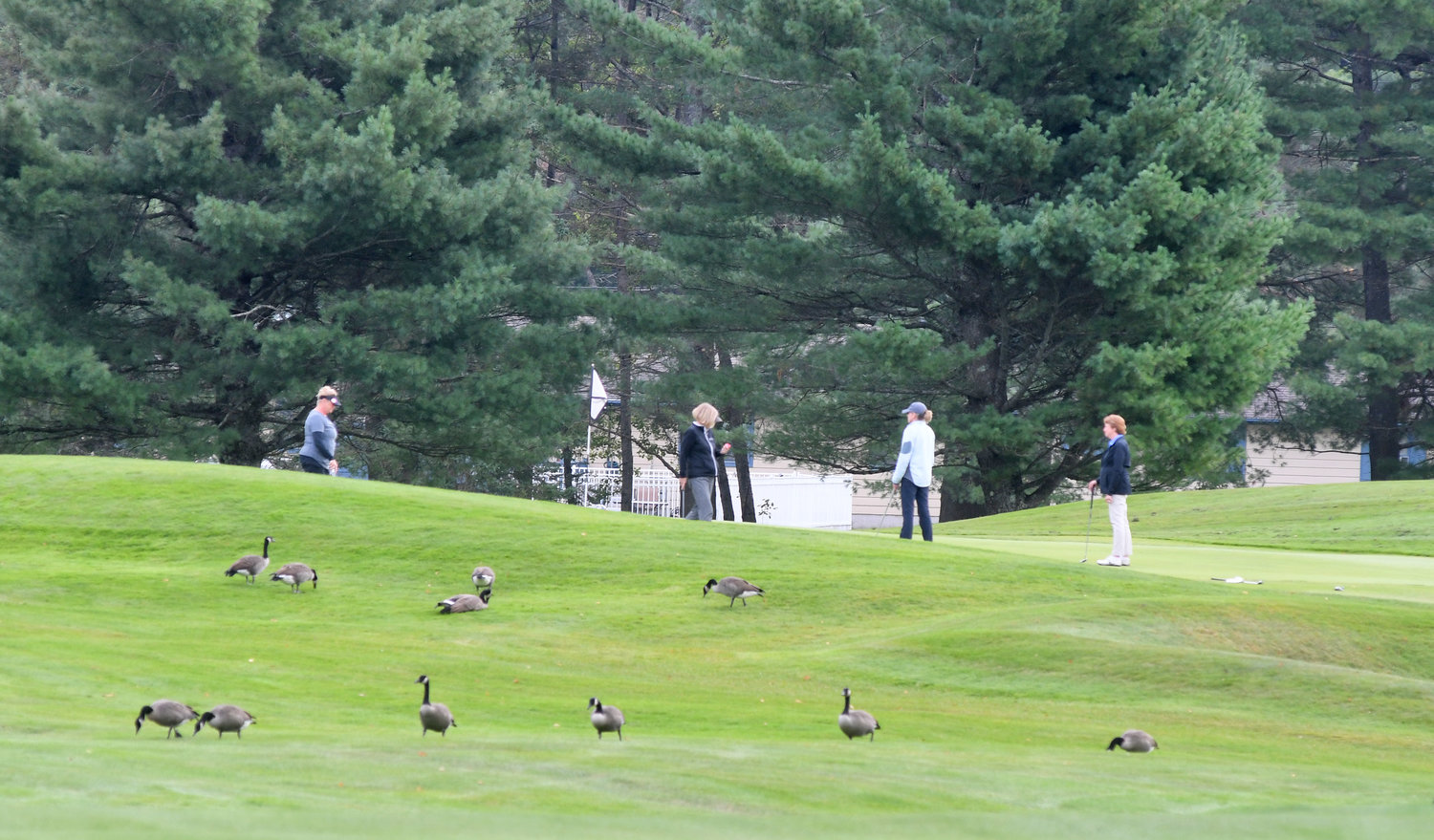 ON THE GREEN — Golfers on a green on the front nine at Thendara Golf Club with geese sitting in the foreground. The course is home to a lot of wildlife, including these geese and some deer. There have even been bear sightings at the course.