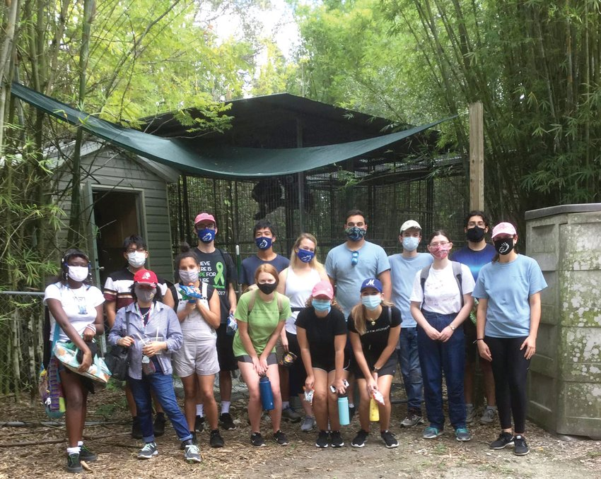 HENDRY COUNTY —  The students, all members of the FGCU Wildlife Club, got together for a group shot after a long, hard day of working to keep the primates housed there eating and dwelling comfortably. They wore masks and observed social distancing rules during their toils in the jungle.