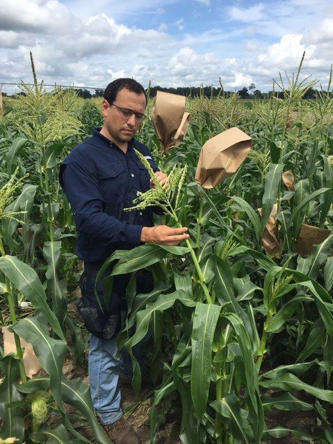 Dr. Resende in a research farm filled with sweet corn.