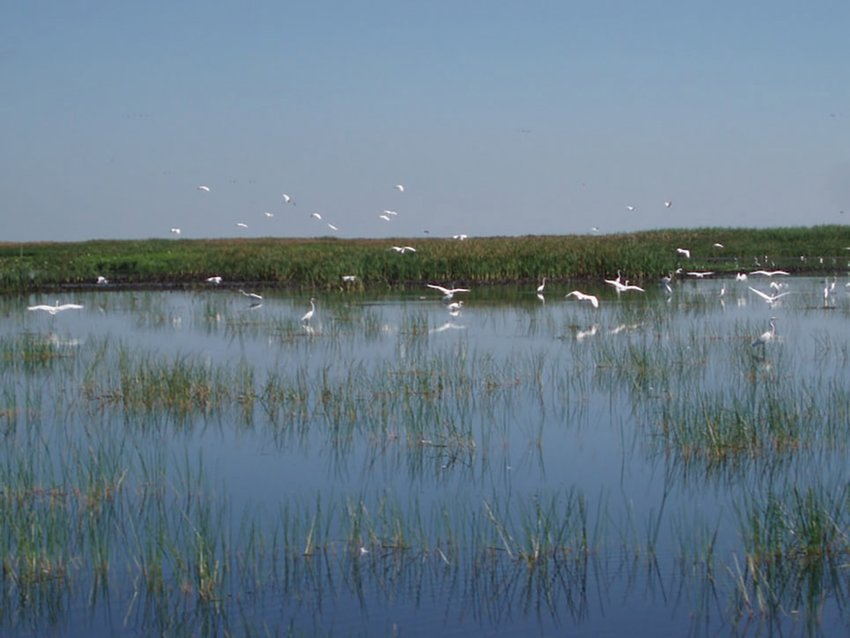 Wading birds on Lake Okeechobee.