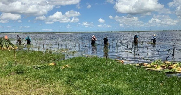 Aquatic plant nursery site at the C-44 Stormwater Treatment Area in Martin County
