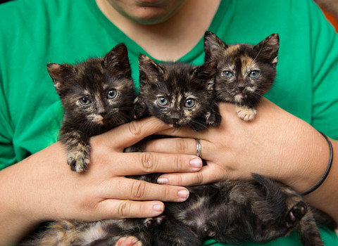 """""""Kitten Season,"""" as it's known in the animal welfare field, starts each spring and lasts through fall."""
