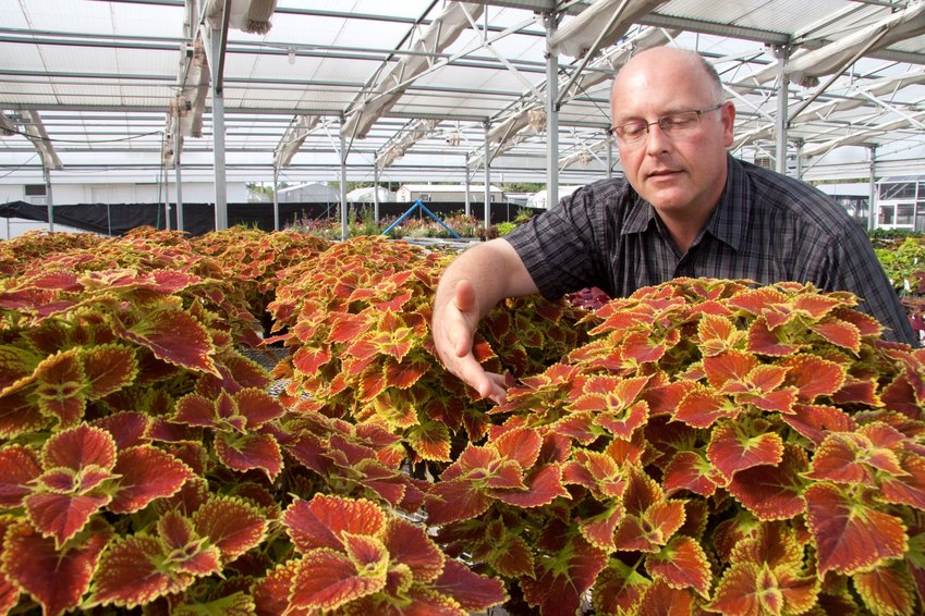 Dr. David Clark showing some of his coleus at a greenhouse at UF/IFAS in Gainesville.