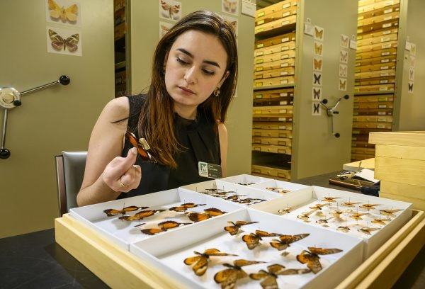 Ana Paula dos Santos de Carvalho was a winner of the 2021 Austin Award for her research on reproductive traits and their impact on butterfly biodiversity.