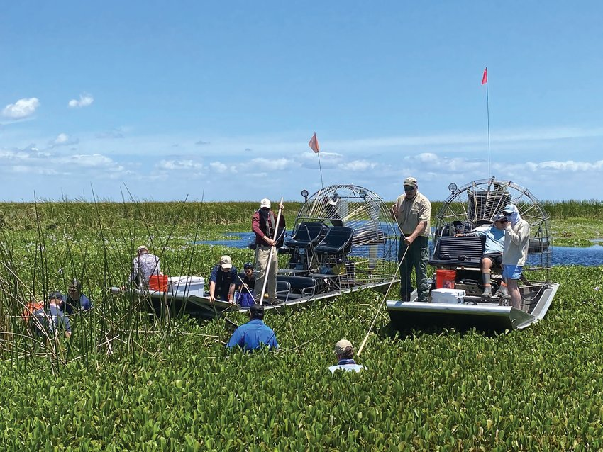 Volunteers worked all day in the hot sun to remove invasive plants on Lake Okeechobee.