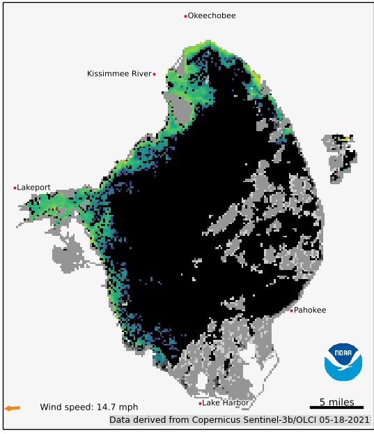 The NOAA satellite image from May 18 shows some algal bloom potential on the west side of the lake. Areas in red or orange have the highest potential for surface scum. Areas in green or blue have moderate algal bloom potential.  Areas in purpose show low algal bloom potential. Areas in black show no detectable cyanobacteria. Areas in gray are cloud cover.