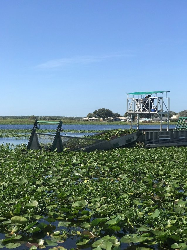 KISSIMMEE - Mechanical harvesters are being used to remove heavy mats of invasive floating plants and tussocks that are encroaching on the Highway 60 bridge and S-65 lock.