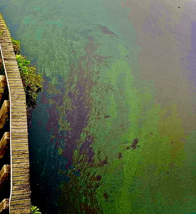 Harmful Algal Blooms have been visible from LaBelle Bridge, in the Caloosahatchee River, for over a month now.