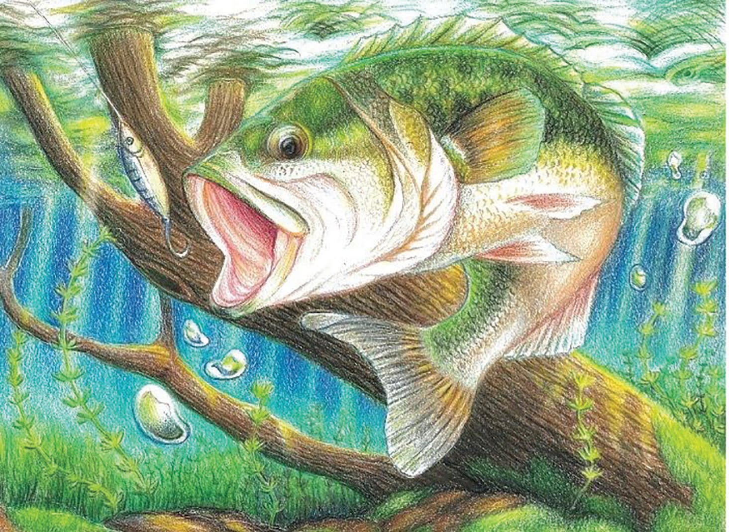 FWC to host Florida State-Fish Art Contest | South Central Florida Life