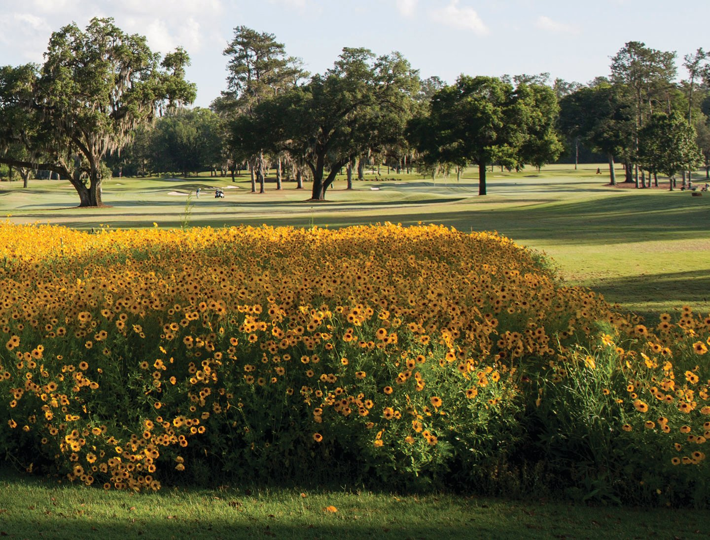 Wildflowers encourage native pollination on golf courses.