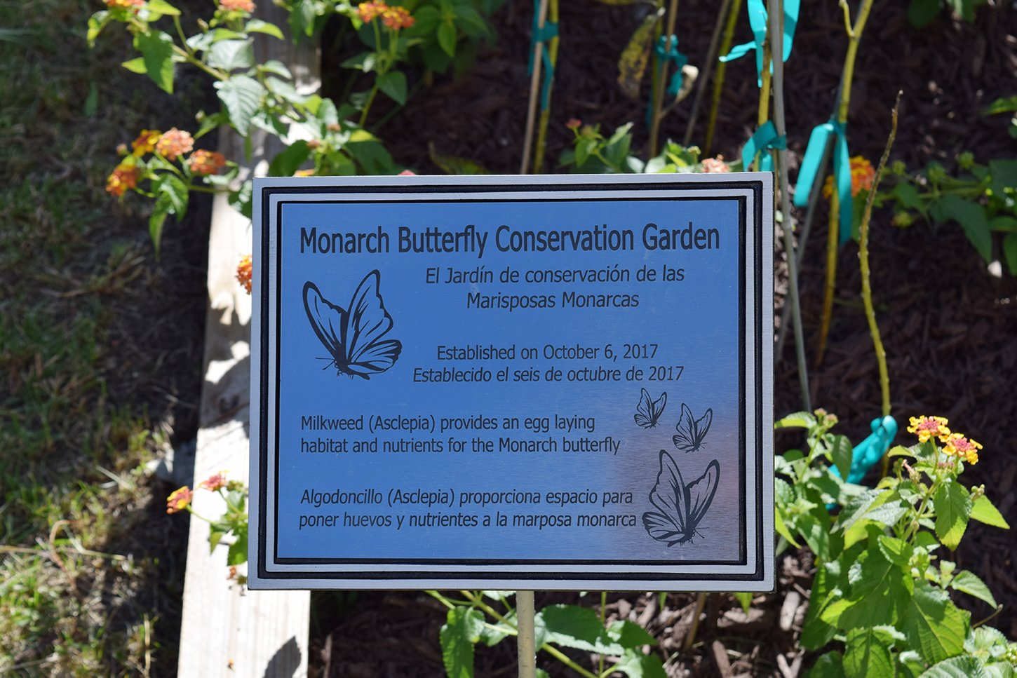 With the help of Marlene Scott's friend Gretchen Bandy-Blacketter, the SPHS Spanish classes constructed the monarch butterfly garden.