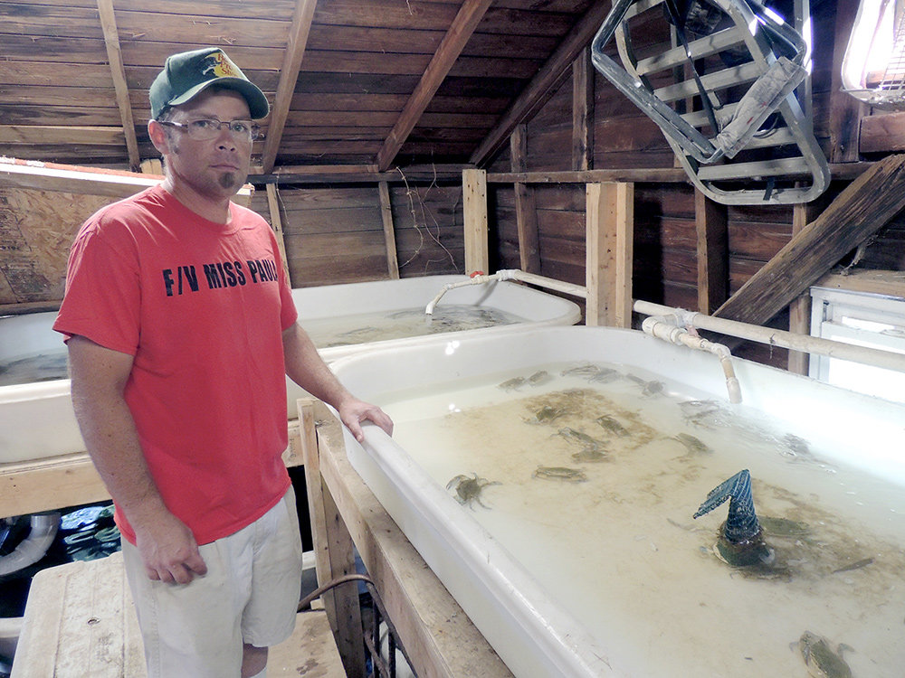 Pasadena waterman C.J. Canby is part of a four-man crew that fishes 500 traps from the Chesapeake Bay five days a week.