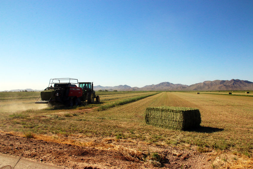 A ranch hand bales hay in a newly cut alfalfa field on Gladden Farms II. In one day, he can bale about 80 acres. Bales weigh about 1,200 pounds.