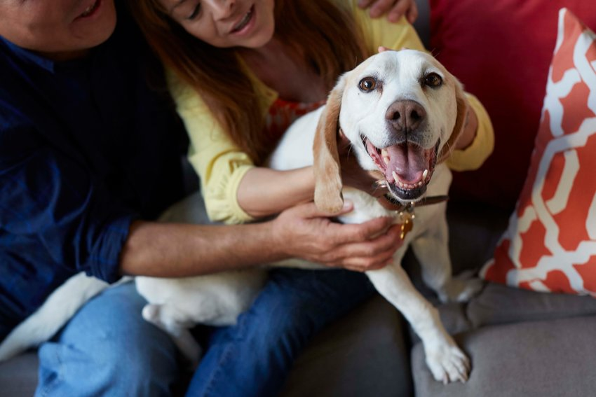 There are options to consider before adopting a canine.