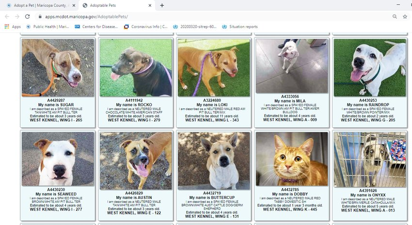 Adoptable pets available at Maricopa County's West Valley Shelter are listed online. Those interested in adopting a pet should write down the animal's ID number and bring it with them to their adoption appointment.