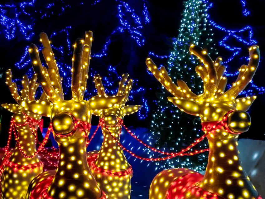 Schnepf Farms has partnered with World of Illumination to present Christmas at Schnepf Farms.