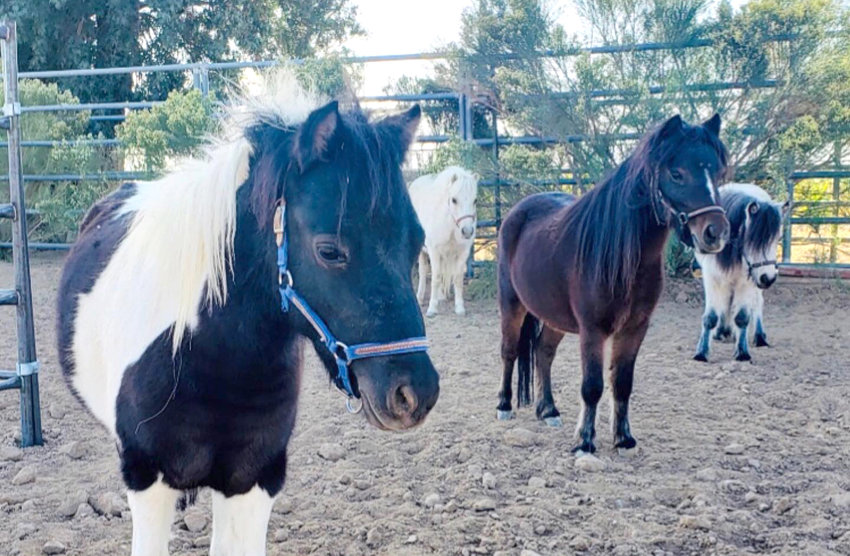 Equine therapy is part of how Hope Community Services in Peoria impacts the lives of kids.