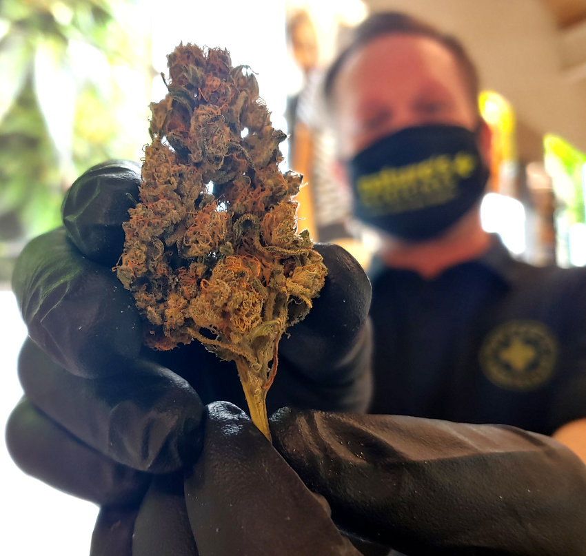 Brian Leach with Nature's Medicines displays a marijuana bud from the Glendale dispensary's inventory back in November as the General Election approached.