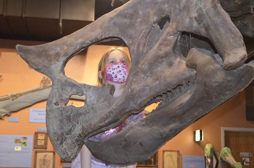 A child looking at a Triceratops nose at the Arizona Museum of Natural History, 53 N. Macdonald in Mesa.