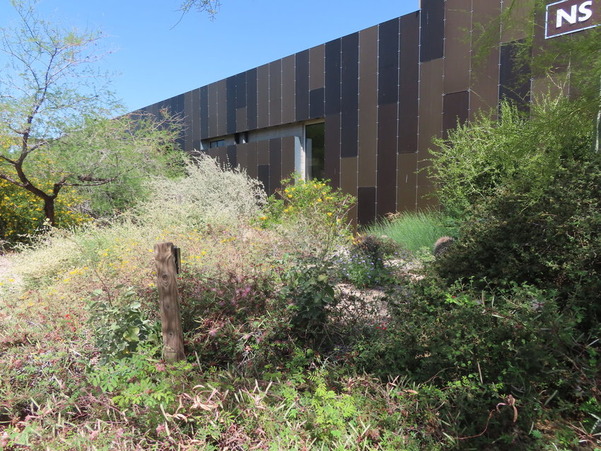 The garden at Scottsdale Community College has been planted with seeds native to Maricopa County in an effort to boost the Maricopa County Native Seed library.