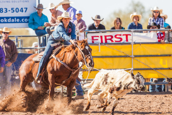 Calf-roping action at Lost Dutchman Days in Apache Junction.